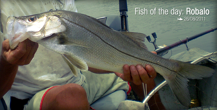 Fish of the Day: Robalo