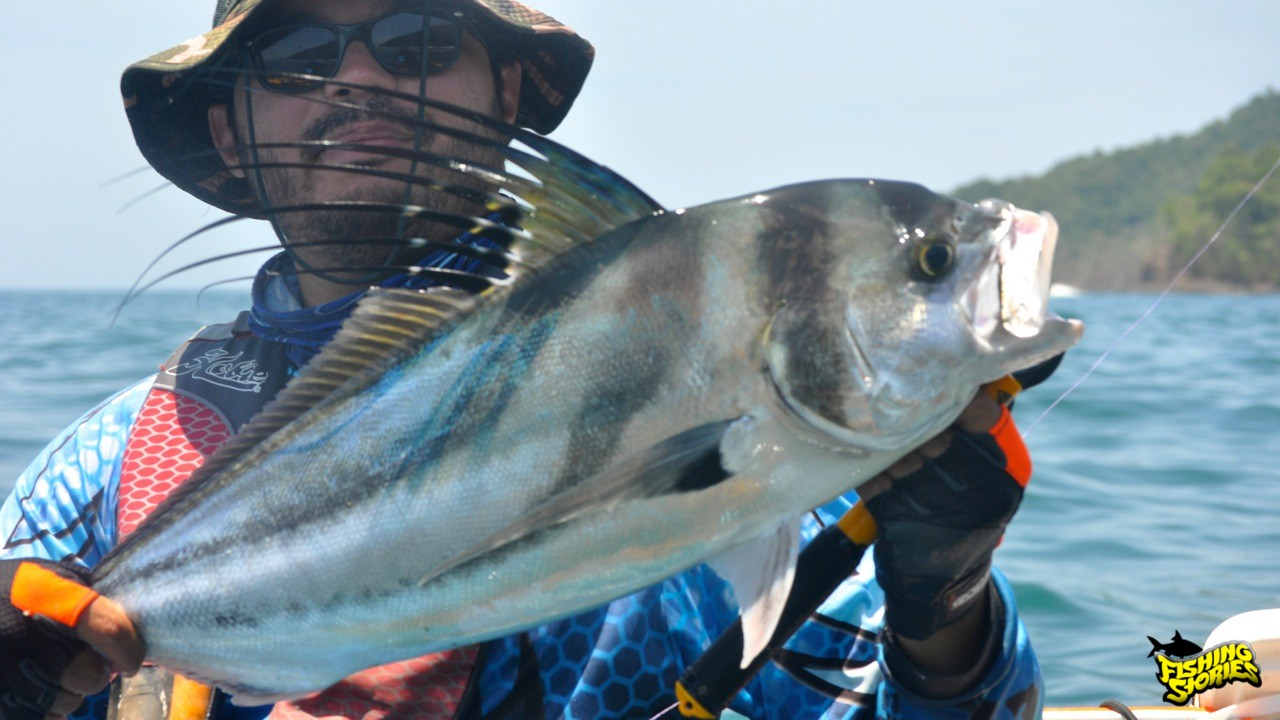 Rooster, good fighter and simbol of sport fishing in Panama.